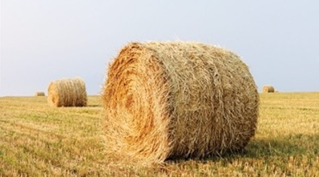 Picture for category Hay