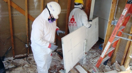 Picture for category Mold Remediation